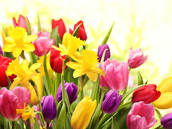 A variety of flowers feature in the Bulb Remembrance